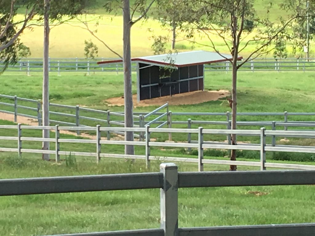 horse shelter builder - rural steel shed